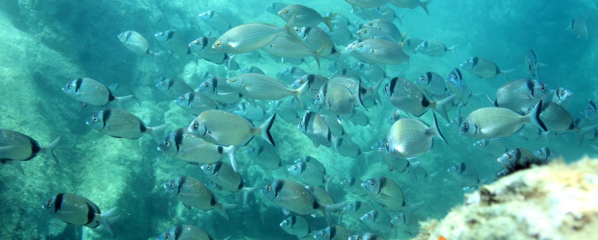 Réserve marine de Cerbère-Banyuls
