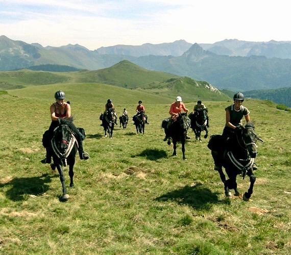 Equitation, loisirs équestres