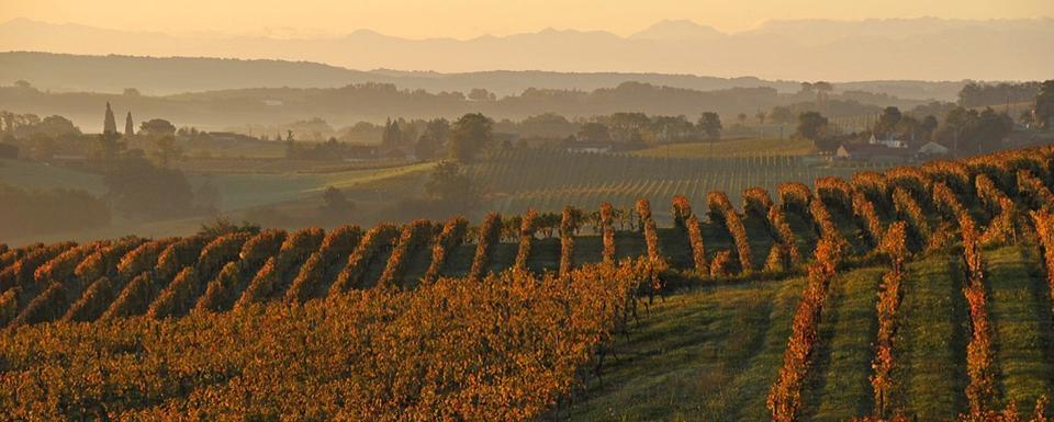 Vignoble d'Armagnac
