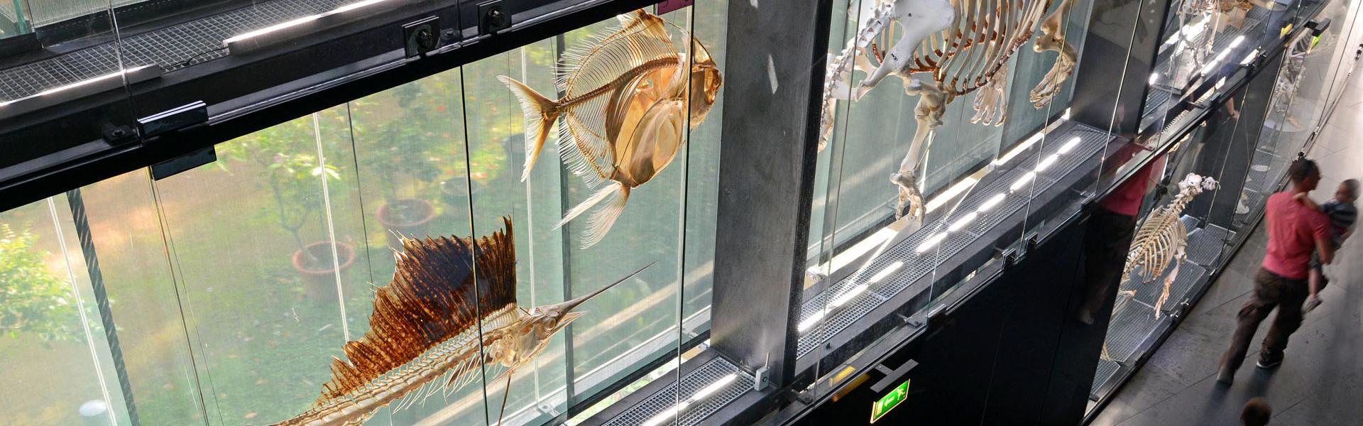 Muséum d'Histoire naturelle à Toulouse