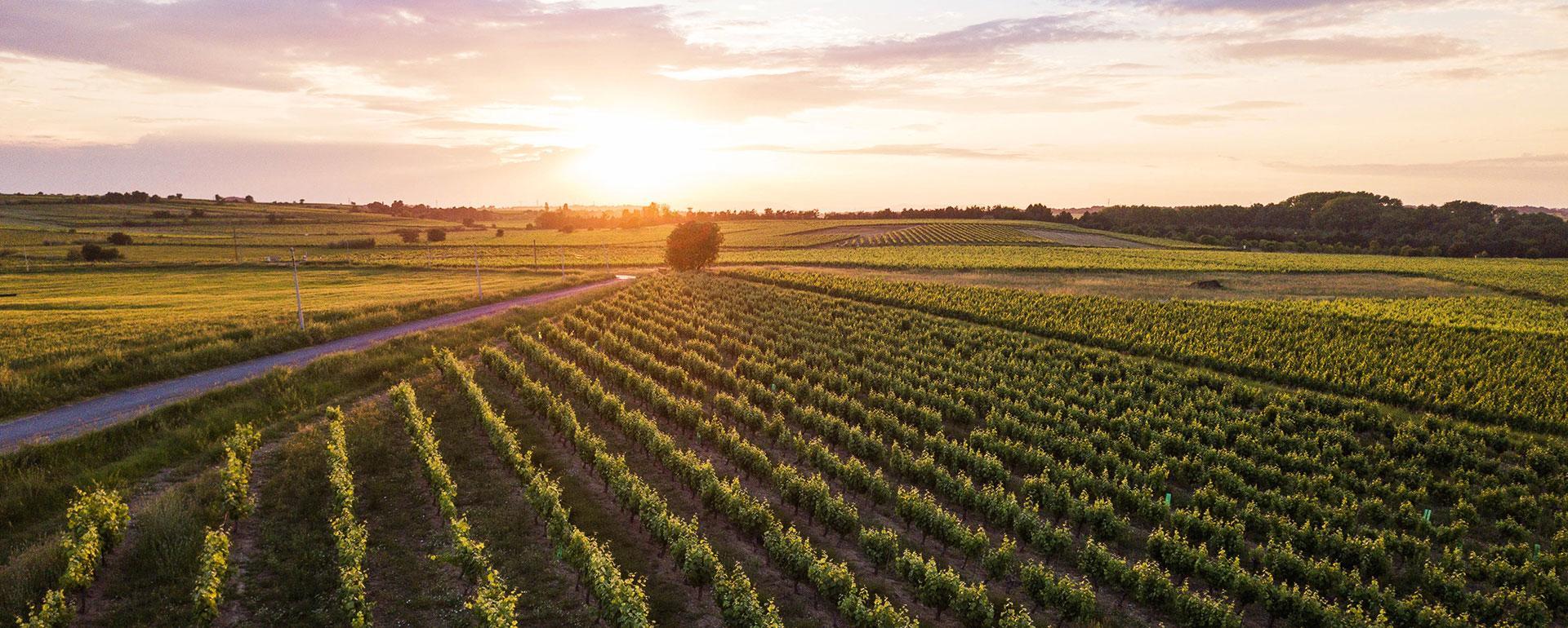Vue sur le Domaine viticole - Domaine Tarbouriech