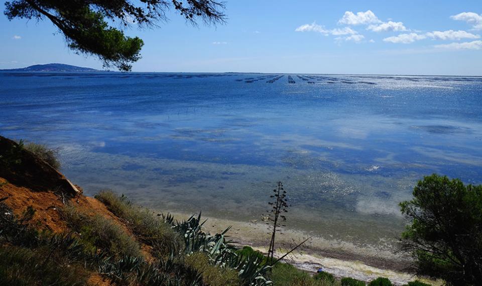 Vue sur l'étang de Thau - Domaine Tarbouriech