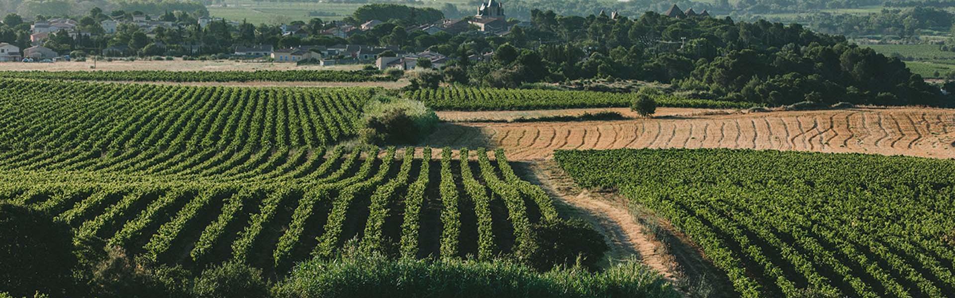 Vignes de l'Aude