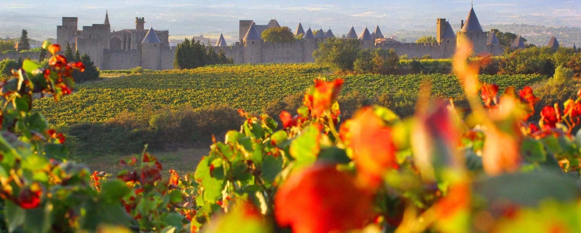 Carcassonne, vignes