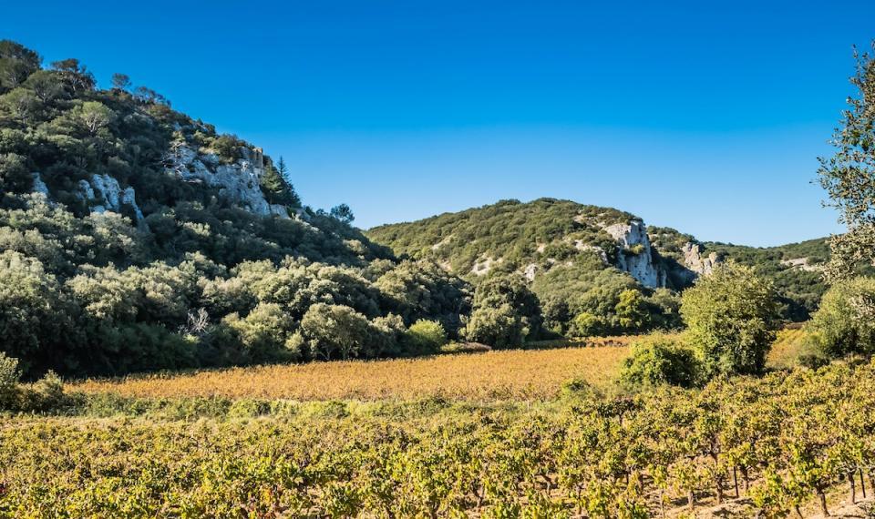 Vignes Côte du Rhône Gardoises en automne