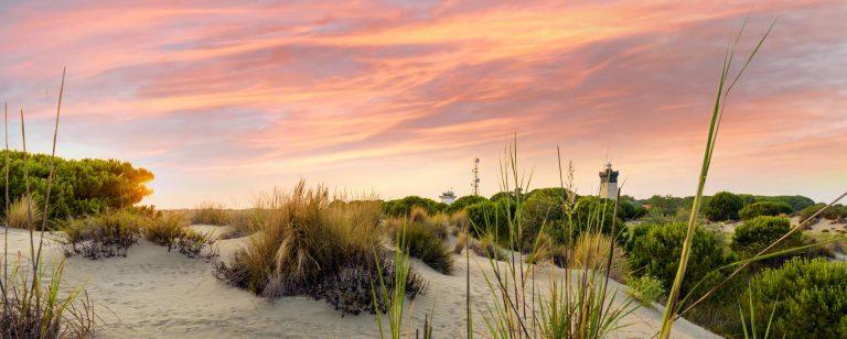 Le Grau du Roi : dunes de l'Espiguette