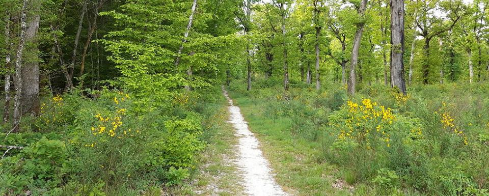 Forêt de Montech - Occitanie