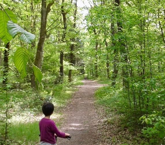 Forêt de Montech - Tarn-et-Garonne
