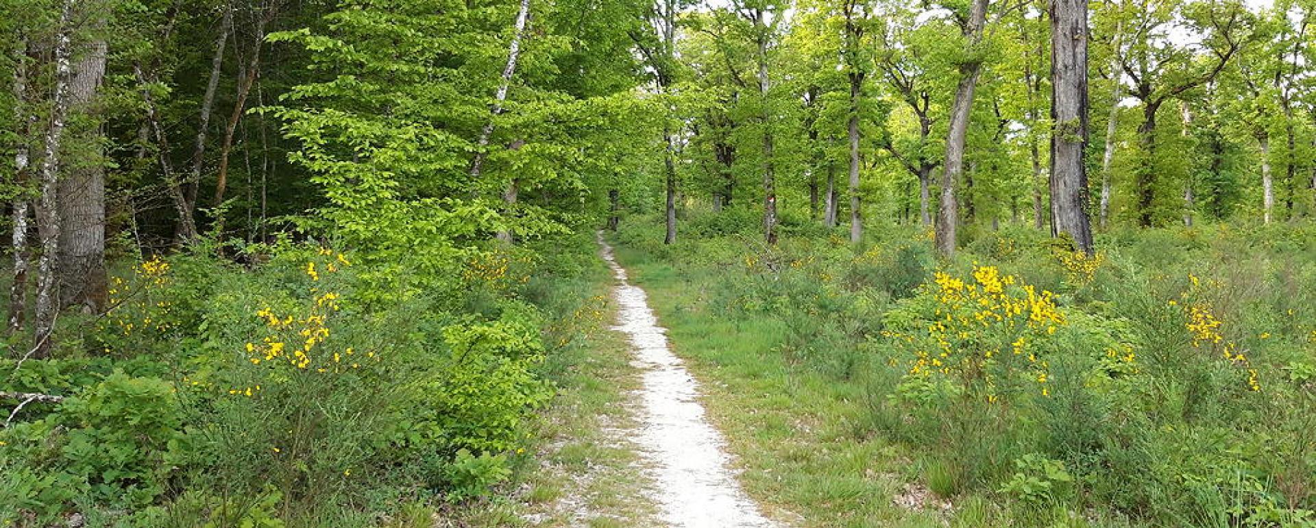 Forêt de Montech (Tarn-et-Garonne)