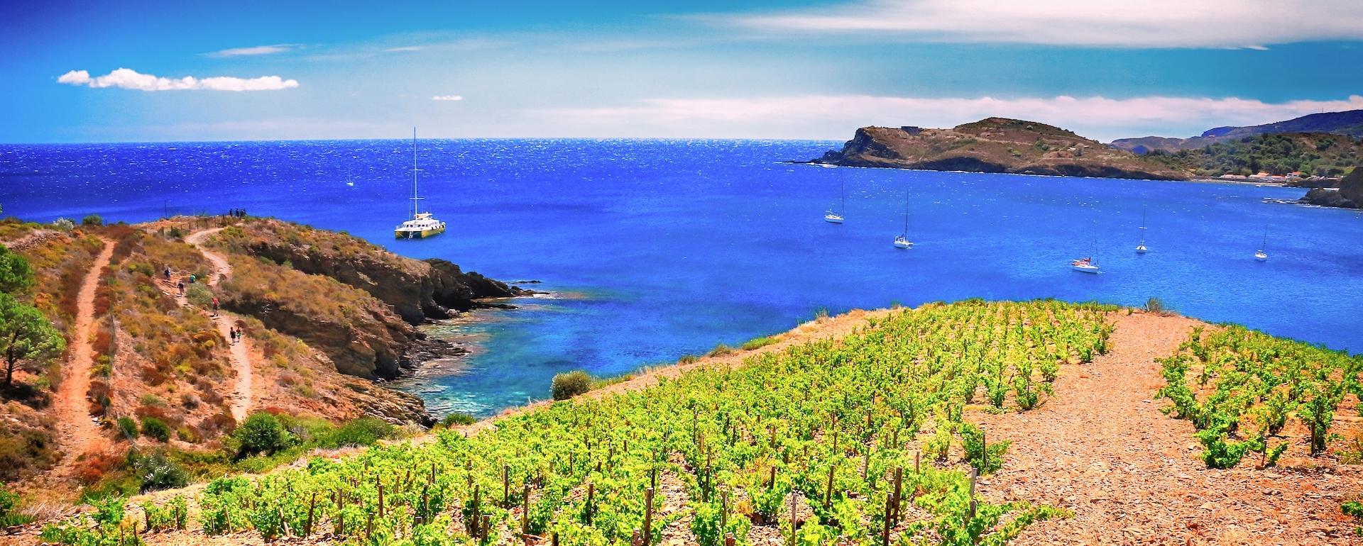 Vignoble de la côte Vermeille
