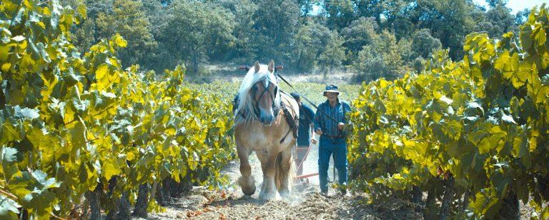Vignoble des Cevennes