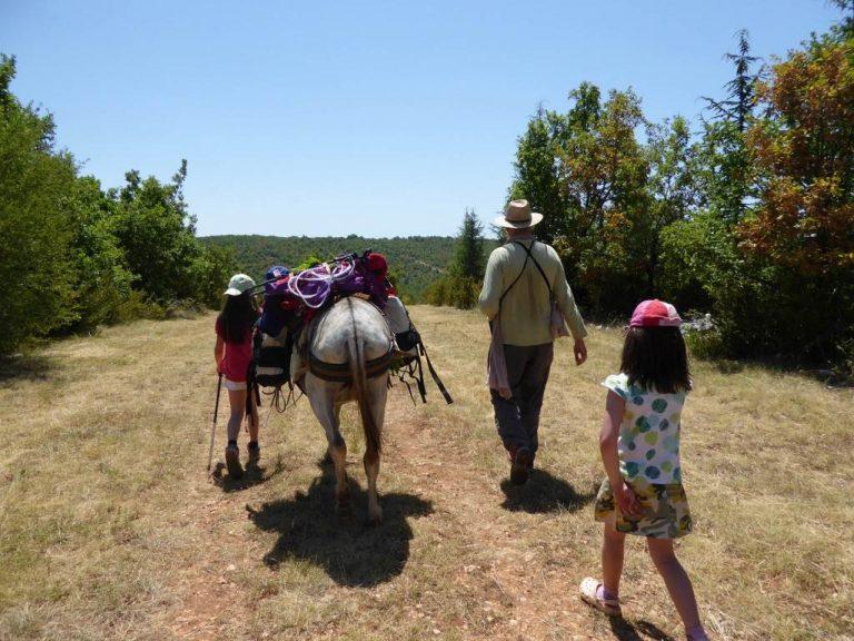 Balades à pied avec des ânes