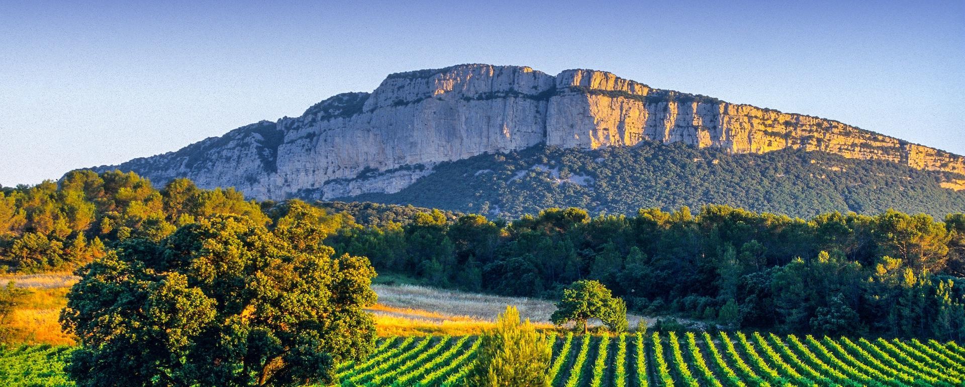 Vignoble Pic Saint Loup - Hérault