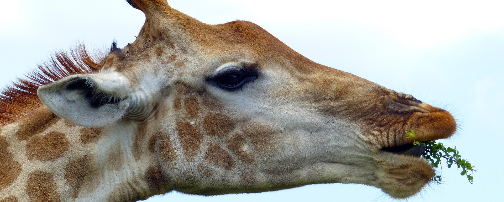 Parc animalier African Safari - Haute-Garonne