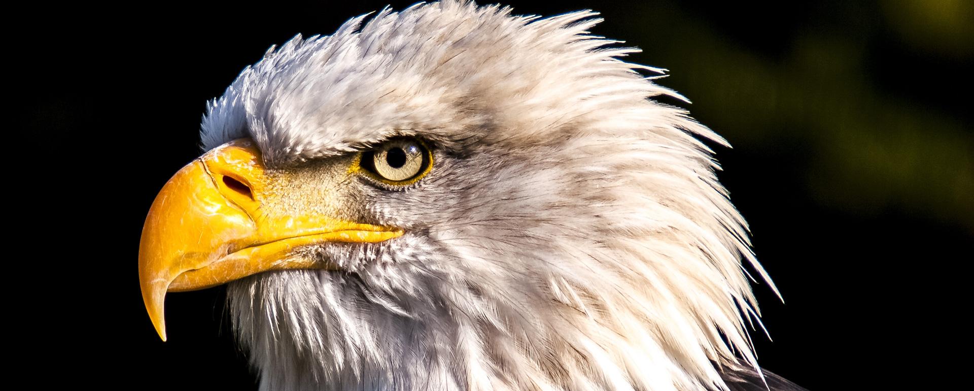 Parc animalier Eco-Parc du Rocher des Aigles de Rocamadour - Lot