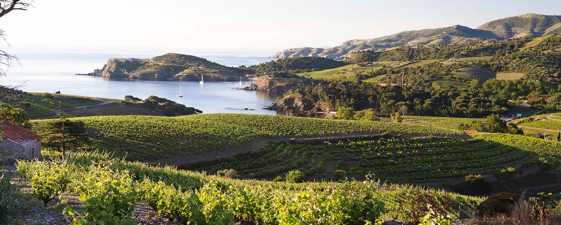 Vignobles du Roussillon - Collioure - Pyrénées-Orientales