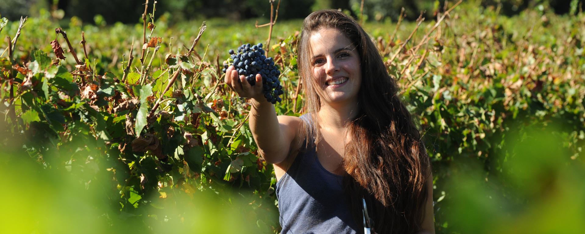 Vignobles de la vallée du Rhône - Gard